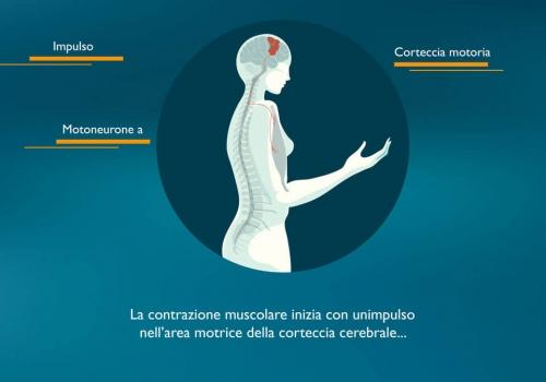 La contrazione muscolare e la sua fisiologia
