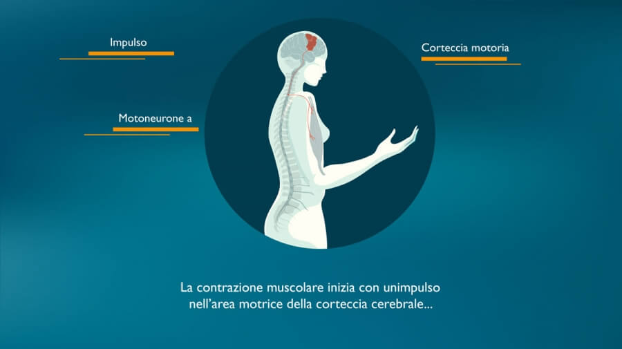 In collaboration with Pinch, a motion graphics video to explain the muscle contraction and its physiology.
